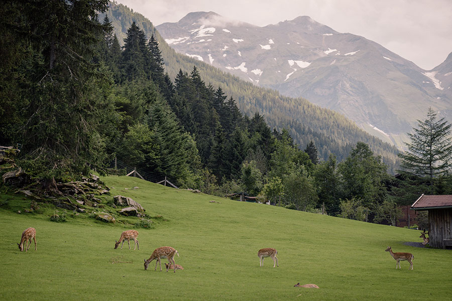 wild-erlebnispark